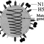 Selectivitat setembre 2009: correcció detallada de l'examen de Biologia